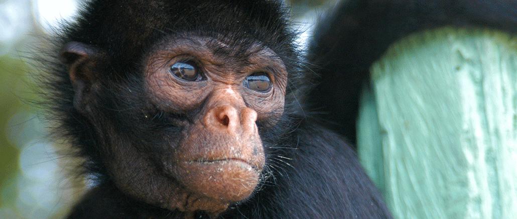 Der Regenwald hat die höchste Biodiversität auf der Welt. Jedes Jahr werden allein im Amazonas 100 neue Tier- und Pflanzenarten entdeckt.