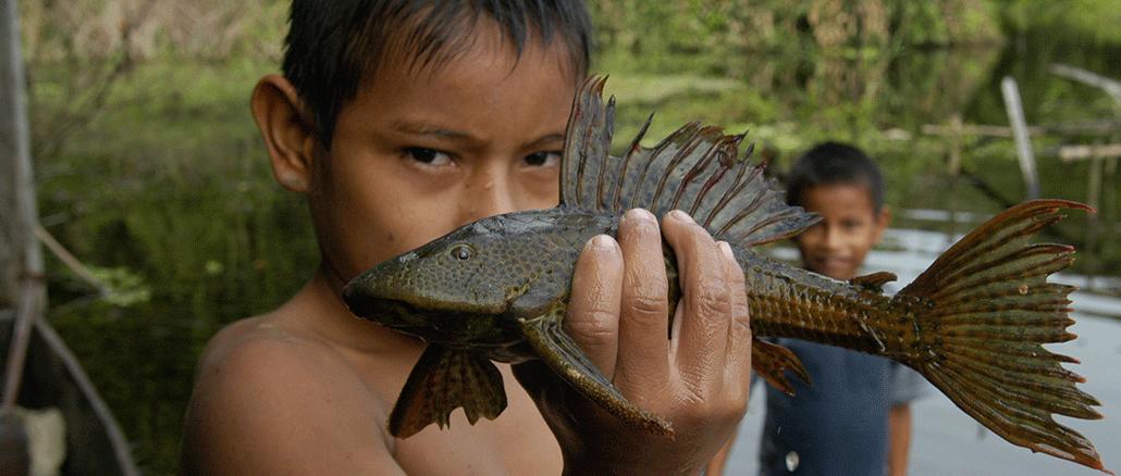 Die unvorstellbare Vielfalt der Fische im Amazonas gibt weiter Rätsel auf.